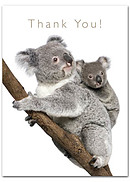 Thank You Cards - Pack of 4