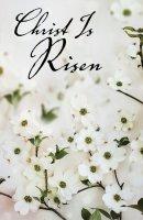Christ Is Risen Dogwood Easter Bulletin (Pkg of 50)