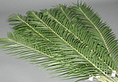 4 Foot Artificial Palm Branch