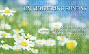 On Mothering Sunday Daisies Postcards - Pack of 24