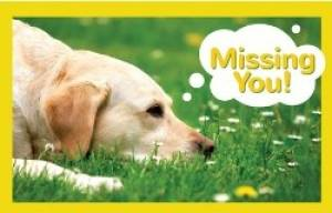 Postcard: Missing You - Dog