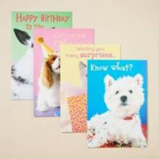 BOXED CARD BIRTHDAY PETS & CRI