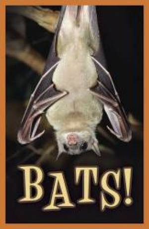 Bats Tracts