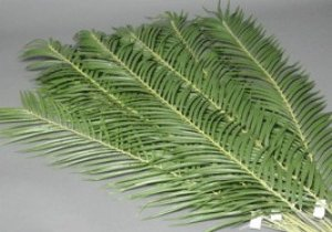 3 Foot Artificial Palm Branch