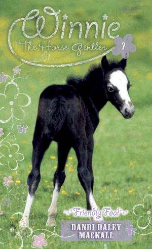 Friendly Foal