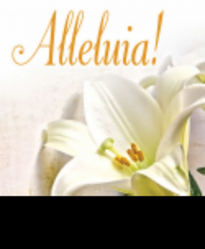 Alleluia! Easter Lilies Bulletin, Large (Pkg of 50)