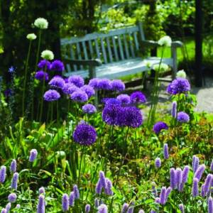 Allium And Garden Bench - Pack of 6 Cards
