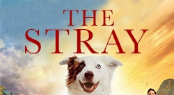 Banner: The Stray DVD
