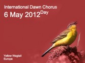 The Dawn Chorus and Your Morning Devotional